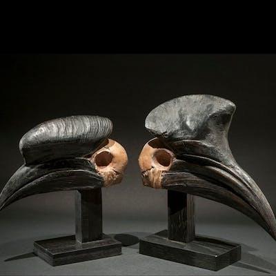 Fétiche - Crâne - Crâne de calao Vaudou - Fon - Bénin