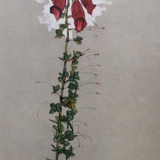 Egon Schiele (1890 - 1918) - Roter Fingerhut 1910 - 1949