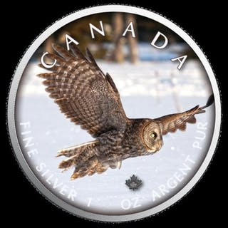 Kanada - 5 Dollar 2019 On the Trails of Wildlife - Eule - 1 Oz - Silber