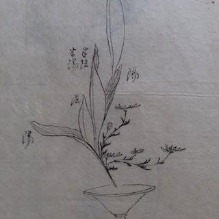 Manuscript; Two Japanese Ikebana flower Botanic - 1815