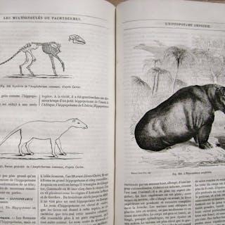 Alfred Edmund Brehm - La Vie des Animaux illustrée