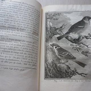 Buffon - Histoire naturelle des oiseaux - 1775