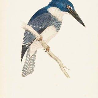 F.O. Morris - 76 hand coloured bird prints - 1895