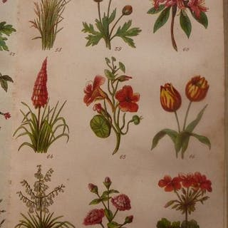 Mr Beeton - Beeton's dictionary of gardening and Beeton's...
