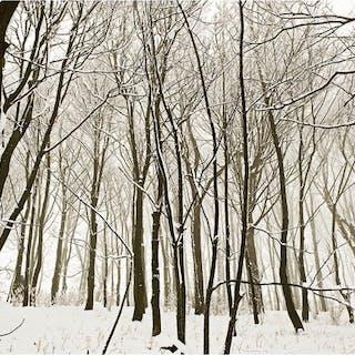 Andre Lichtenberg (1964-) - White Woodland, 2009
