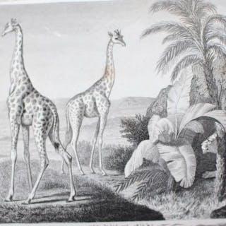 Buffon - Oeuvres choisies - 1858