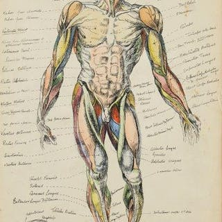 Derrick Latimer Sayer, British 1917-1992- Anatomy of a man, 1948;