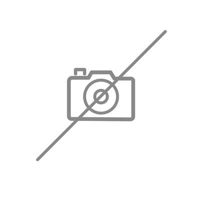 Deux cornes de Vache domestique (Bos taurus) (D) avec peinture figurant