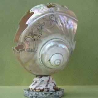 19thc Chinese carved and engraved Nautilus Seashell. Casper estate FR3SHC1