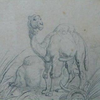 Pencil drawiing on paper of two resting Camels by Stefano della Bella