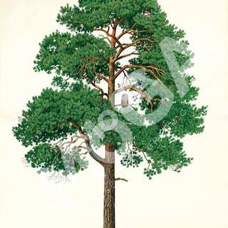 Träd och skog av Bark, 1990-tal.