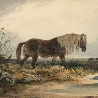 Newton FIELDING, Newton FIELDING Londres, 1799 - Paris, 1856 Cheval