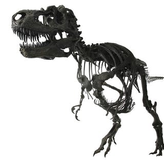 Complete Gorgosaurus Skeleton Cast