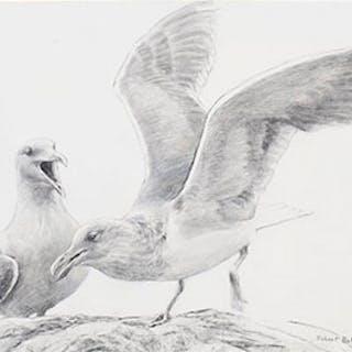 Seagulls - Robert Bateman