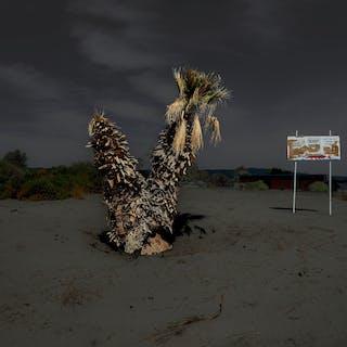 2 Palms & Sign - Marc Plouffe