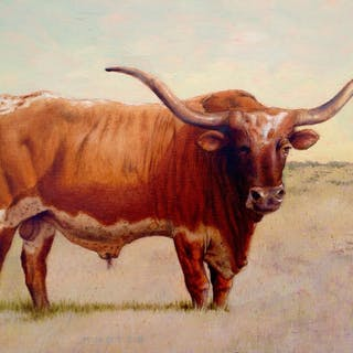 Texas Longhorn - Steve Knotts