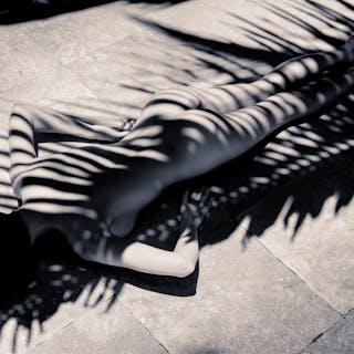 Palm Zebra - A K Nicholas