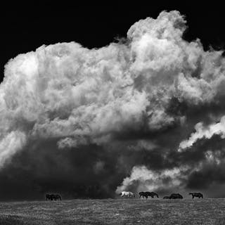 cfd06075d62e4  Billowing Clouds and Horses  by Mike Grandmaison - Mike Grandmaison ·