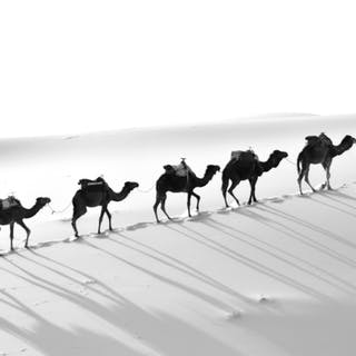 Camel Route - Sofia Barroso