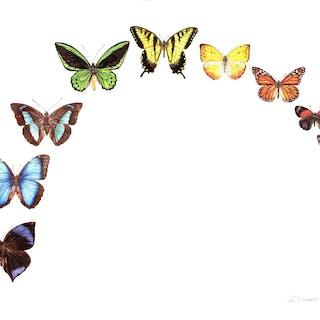 Butterfly Rainbow - Zoe Elizabeth Norman