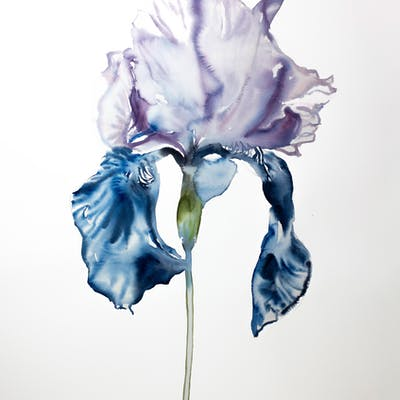 Iris No. 67 - Elizabeth Becker