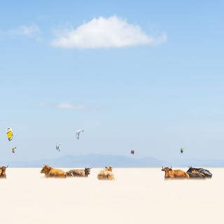 COWS AND KITES - Andrew Lever