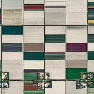 Aerial Views, Tulip Fields 01 - Bernhard Lang
