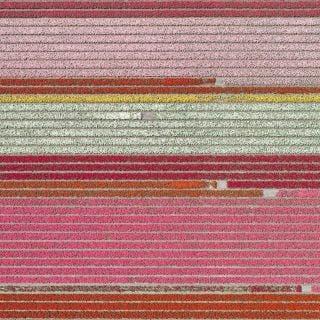 Aerial Views, Tulip Fields 05 - Bernhard Lang