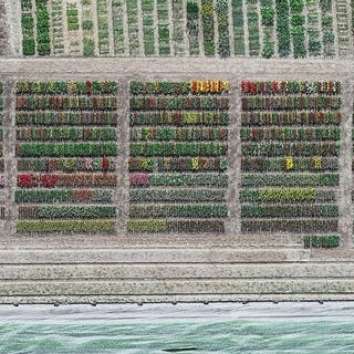 Aerial Views, Tulip Fields 08 - Bernhard Lang