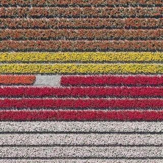 Aerial Views, Tulip Fields 23 - Bernhard Lang