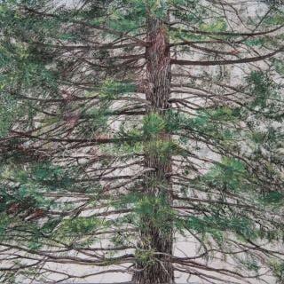 Tree of Fire - Hinoki - Lumi Mizutani