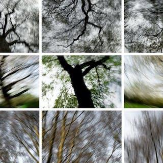 Steve Sabella (1975-)- In Transition, 2010