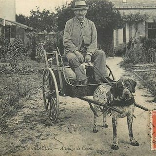 France - Dog Driving in Beauce - Les Yvelines 78 - - Single postcard - 1911