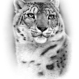 Schu - Snow leopard