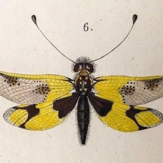 Jules Pierre Rambur -  Histoire Naturelle des Insectes. Nevroptères - 1842
