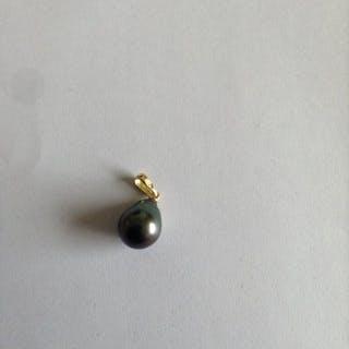 18 kt. Gold, Tahitian pearl, 10.4-13 mm - Pendant