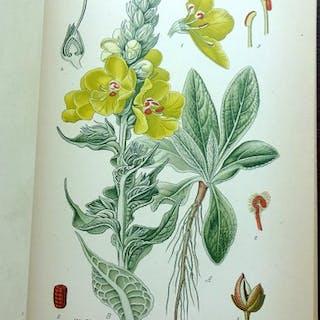 A. Masclef - Atlas des plantes de France utiles, nuisibleset ornementales - 1893