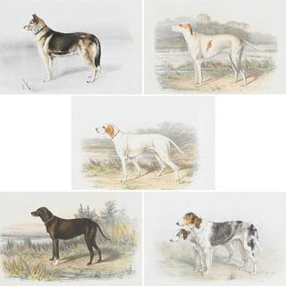 Five Russian Dog Lithographs