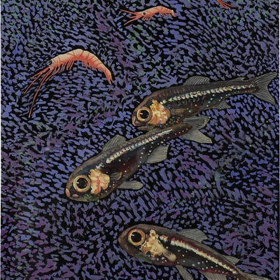TRANSPARENT FISH WITH SHRIMP