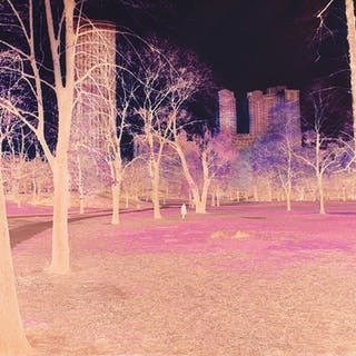 Mitchell Funk, Central Park in Negative Color (1970)