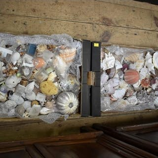 A small collection of exotic shells, (2 boxes). ...
