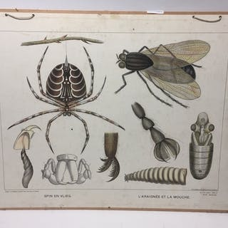 French Educational Mounted Poster Of Fly And Spider 76 x 57...