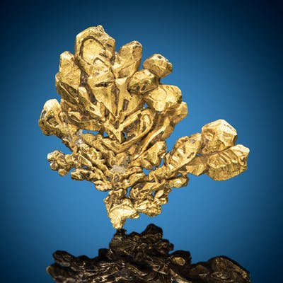 Native Gold Coulterville, Coulterville District, Mother Lode Belt