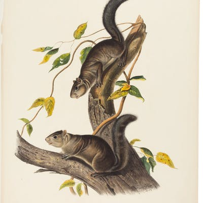J. J. Audubon. Group of Three Rodents from Quadrupeds of North America.