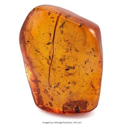 Amber with Inclusions Hymenaea protera Oligocene Dominican Republic  ...
