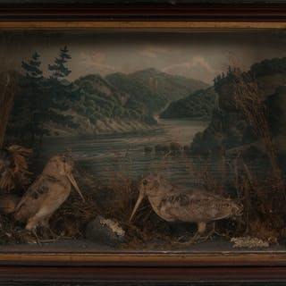 Victorian Taxidermy Display with Woodcocks