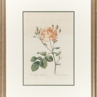 Botanical Prints after Pierre-Joseph Redouté (French, 1759-1840)