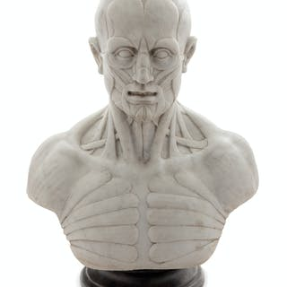 An Italian Marble Anatomical Bust