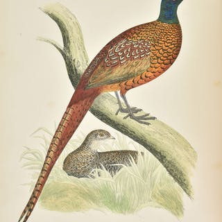 Morris (Beverley). British Game Birds and Wildfowl, 1864