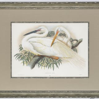 H.C. Richter (after), Great White Heron